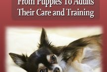 How To Train a Chihuahua / Chihuahua lovers... Let's learn how you can train a chihuahua with how to house train a puppy, how to potty train a chihuahua, chihuahua names, and other chihuahua stuffs..