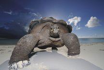 Animals: Turtle / Tortoises