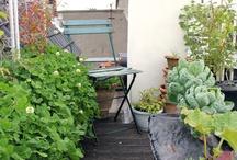rooftop gardening & farming