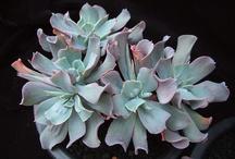 Cactus names succulents