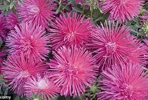 Wedding Fireworks Flowers / Here are some ideas for flowers for your firework themed wedding