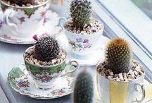 Small succulents in pots etc