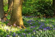 woodland garden / by Nancy L.