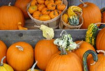 Pumpkin Season / Fall is here - and that means pumpkin season! Not only is fall's signature squash versatile, it also packs some powerful healthy perks -- like keeping heart health, vision and waistlines in check.