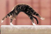 •gymnastique•