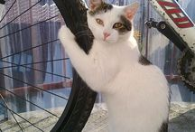moje koty...cats...