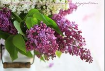 Flowers - moje foto