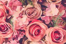 Fotos florales
