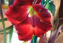 Dudelki kwiaty