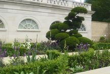 Surrey Garden A