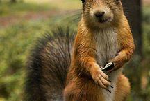 Tiere Eichhörnchen