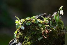 rare plant