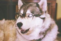 Huskies♥