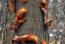Eekhoorns / by inge park