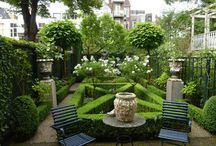 Garden Scapes I love