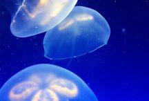 Sealife / by Nene*C