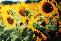 Nature / Se tem uma coisa que eu amo, é a Criação!