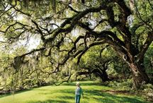 Charleston Black Book / by Condé Nast Traveler