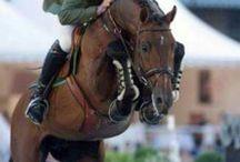 Koně ve sportu