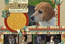Scrappy pet pages / dogs, cats, gold fish, hamsters... we love to scrapbook our pets.