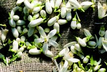 Aromatherapy / essential oils,herb tinctures