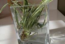 Plants I love :)