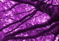 Purpleness / All things purpley