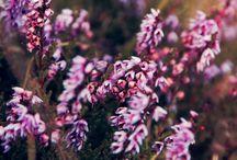Fleurs & Plantes - Flowers & Plants / Les plus belles photos de fleurs, de plantes et d'arbustes repérés sur Internet, pour mettre un peu de beau et de douceur sur nos écrans...
