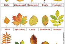 Ggt und Herbst Kiste Thema Bäume