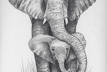 Animals ❤❤