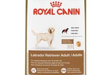 Best Dog Food for Labs / Not all dogs require the same amount of nutrients. If you have a Labrador retriever, then you will want to know the best dog food for labs.  Read our reviews here: https://www.munch.zone/best-dog-food-labs/  ----------  Disclosure:  The Munch Zone is a participant in the Amazon Services LLC Associates Program, an affiliate advertising program designed to provide a means for sites to earn advertising fees by advertising and linking to amazon.com.