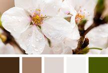 Color: Palettes