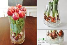 Bulbi e fiori