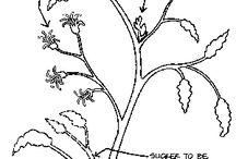 Herbs and Veggie Growing Stuff