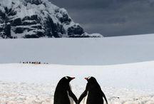 Animal love....
