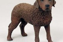 Chesapeake Bay Retrievers / Chesapeake Bay Retriever products