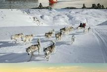 Greenland travel inspirations