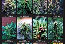 stoners guide