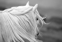 The Quotable Pony / by Rebecca White