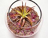 terrariums & gift ideas / lovely terrariums from around the world, including our own!