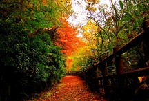 Autumn | FUKUOKA / by Awesome FUKUOKA