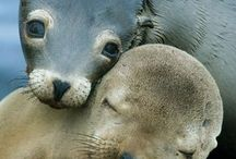 Valentine's Day Animals! / Animals celebrating Valentine's Day!