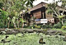 Bali Trip / 2015 Holiday
