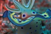 September 2013- Rope, glass & sea slugs / Sea slugs