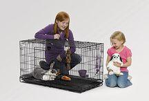 Bunny and Hamster care ideas / by Allison Lentz
