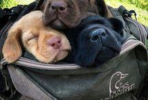 Cachorrinhos fofinhos
