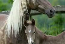 Horses Baby and mom