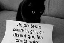 chat qui proteste