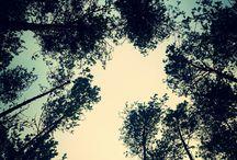 Forest / Fotografia krajobrazu