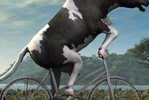 Vaca *-*